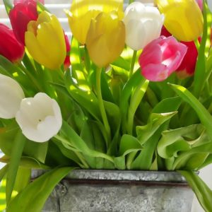 Consigli utili per mantenere più a lungo i fiori in vaso