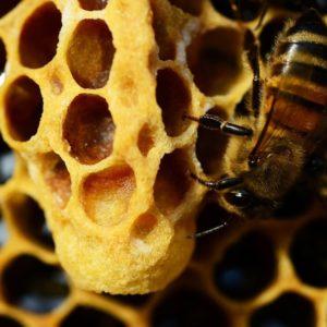 Domande, risposte e luoghi comuni in tema di…api