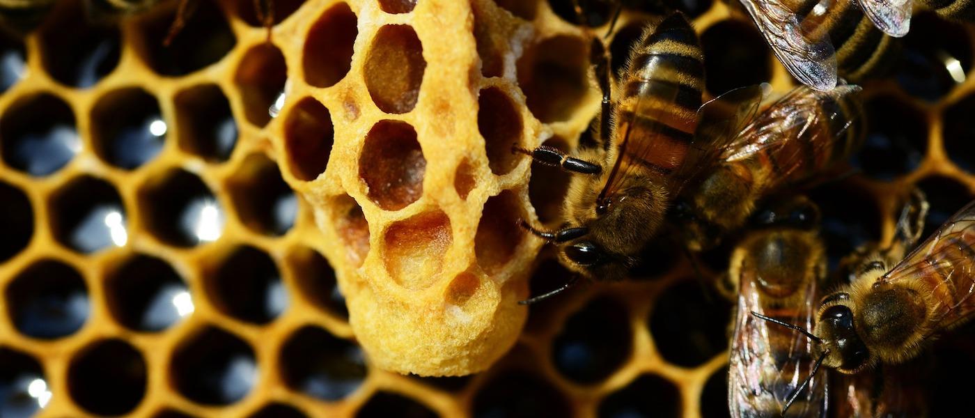 api nell'alveare