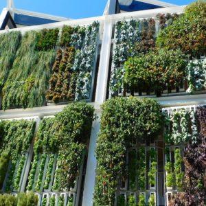 A Roma il Workshop Intensivo Giardini Verticali