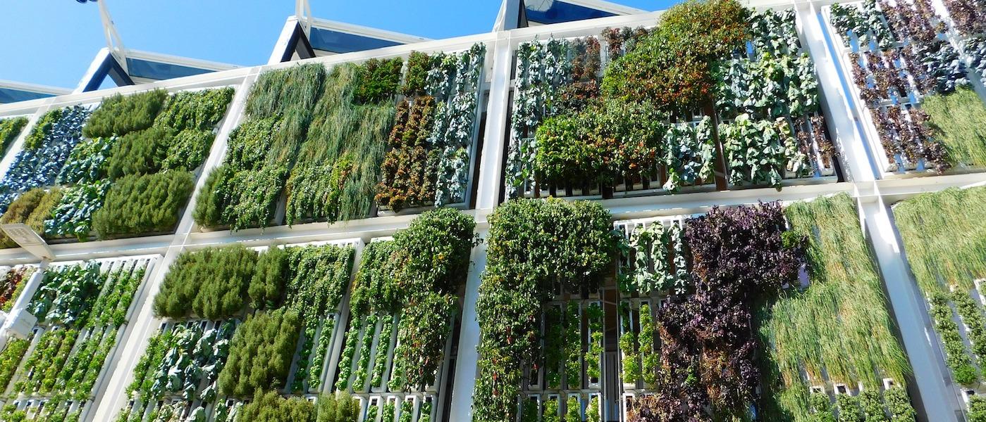 Pareti Verdi Verticali Costi a roma il workshop intensivo giardini verticali - greenious