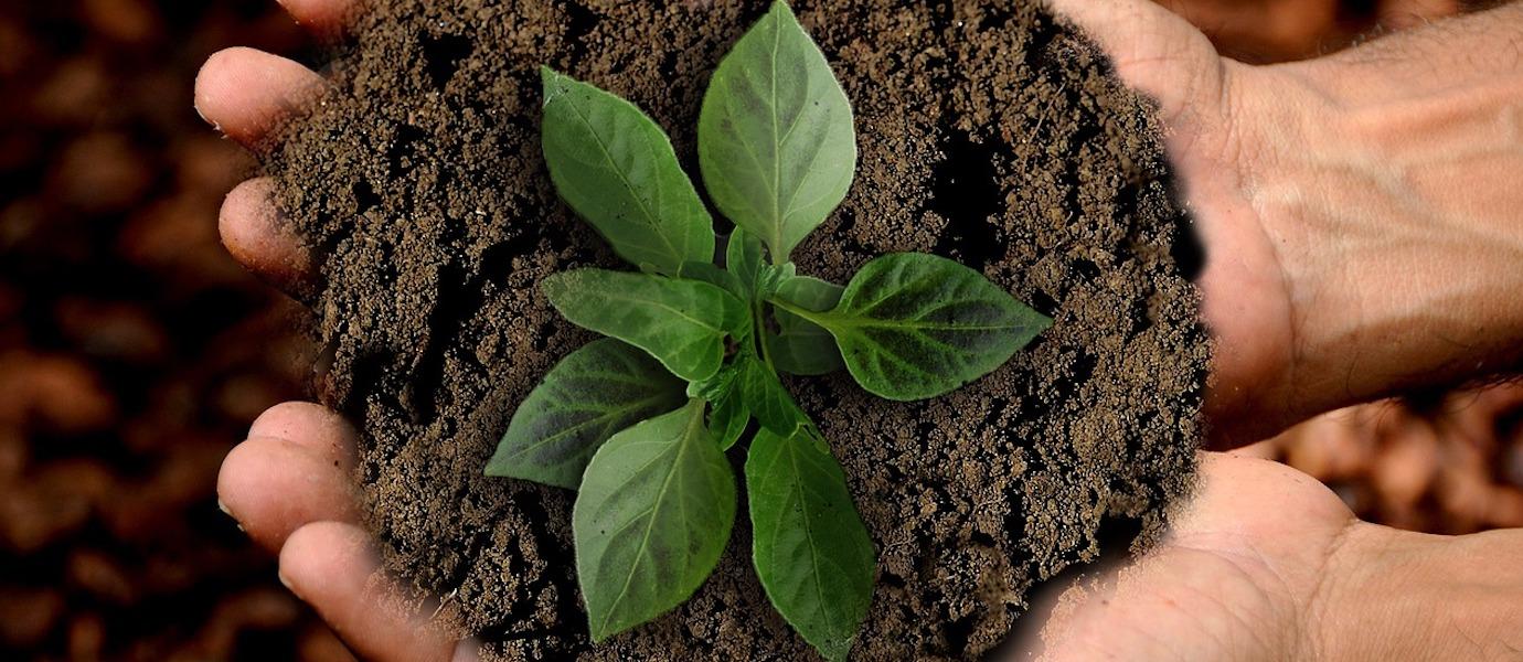 mani con pianta, diritto all'ambiente
