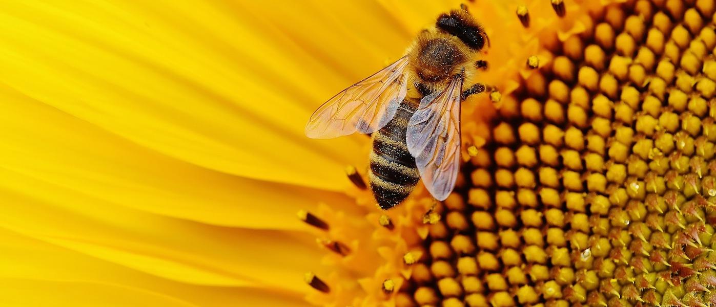 Perchè le api vengono considerate dei bio accumulatori?