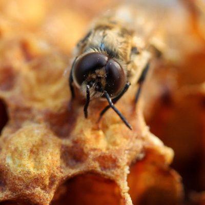 Insetticidi contro le api: quali conseguenze?