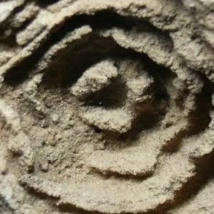 Le Stromatoliti e le prime forme di vita sulla terra