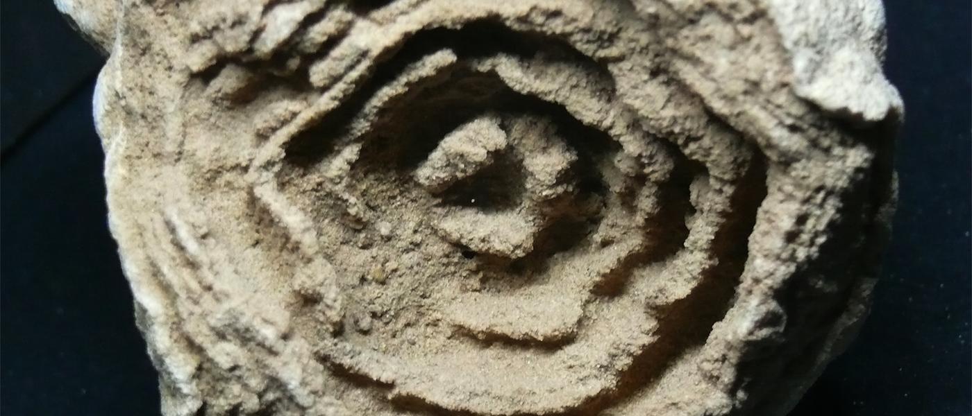 forme di vita fossile
