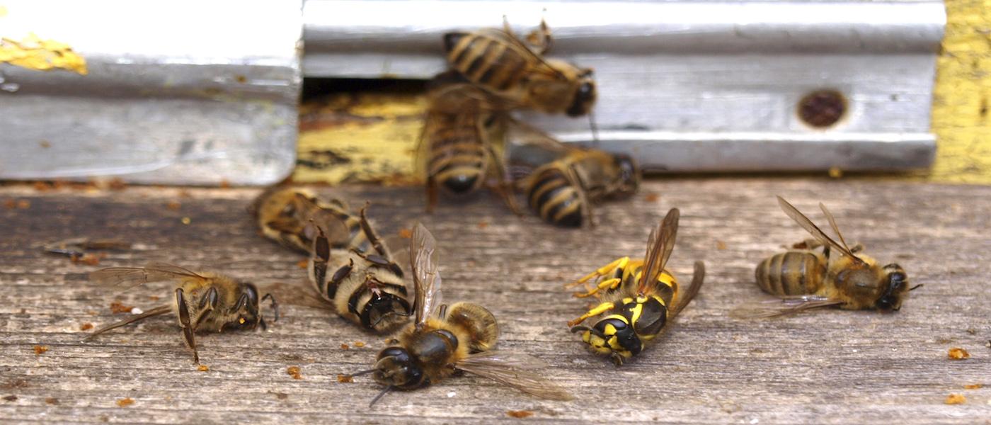 api e pesticidi, divieto di tre pesticidi