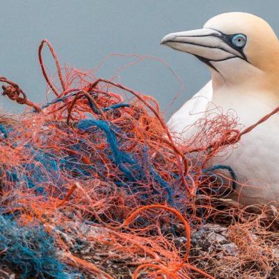 Cosa sono e come si creano le isole di plastica