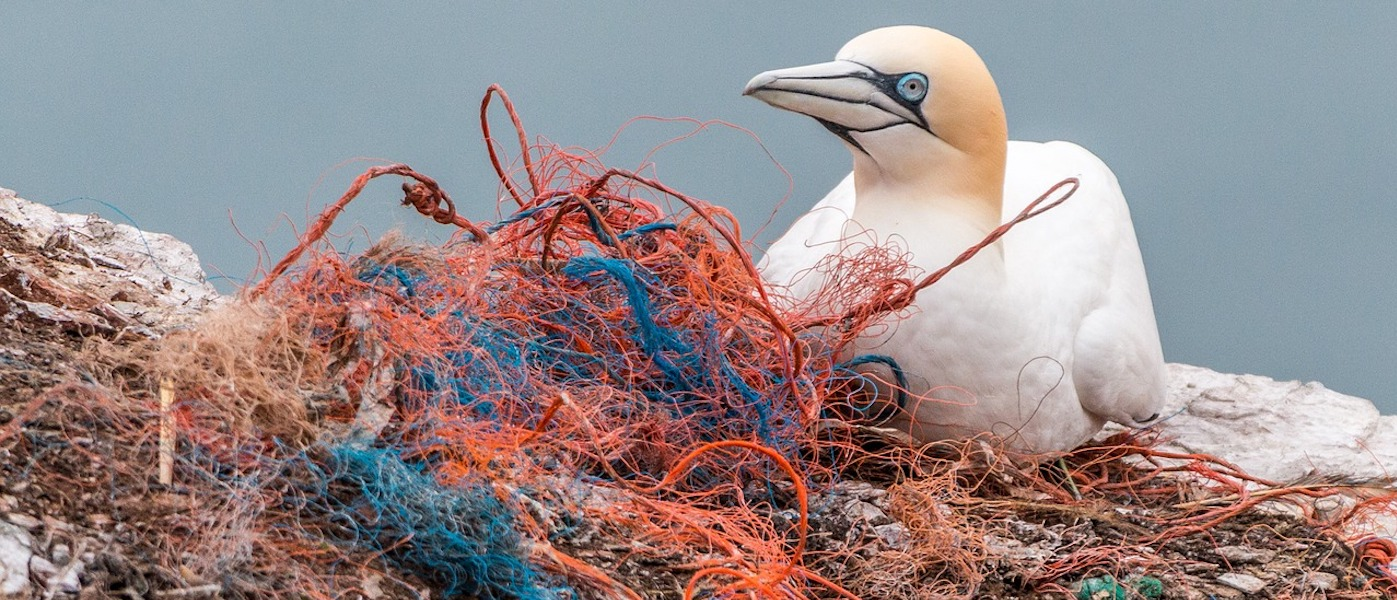 isole di plastica. uccello e inquinamento del mare