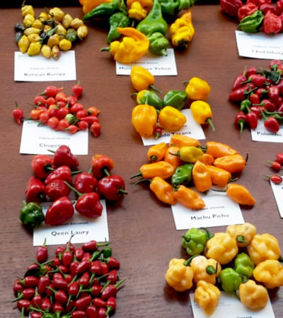 Il CUFAA presenta la filiera del peperoncino piccante nel territorio laziale