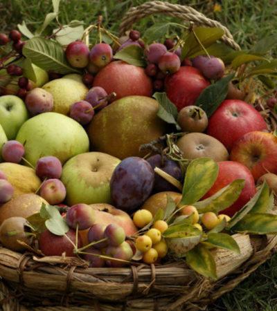 Al Rural Market rarità vegetali e razze animali dimenticate