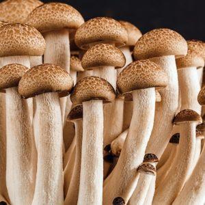 Funghi: imparare a riconoscerli con i carabinieri forestali