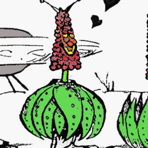 "Aloe peglerae: una pianta ""marziana"""