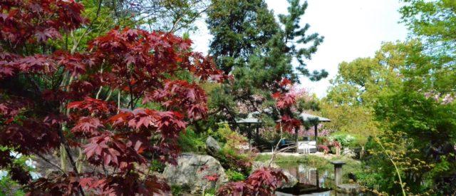 giardino giapponese, orto botanico di roma
