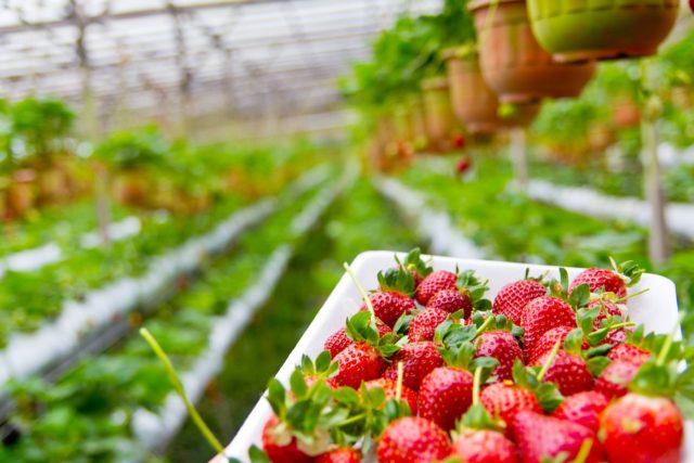 ozono in agricoltura