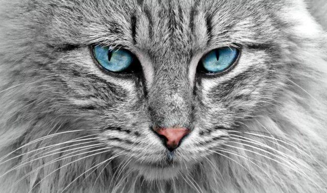 anima degli animali