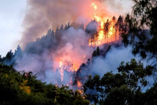 Gran Canaria incendio