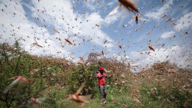 Africa emergenza locuste