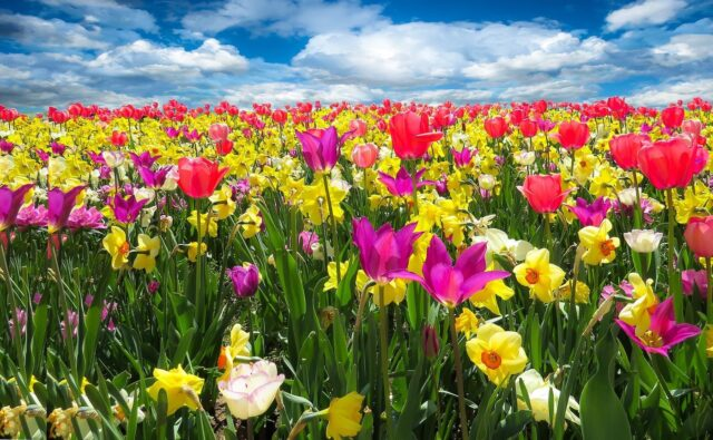 florovivaistico fiori