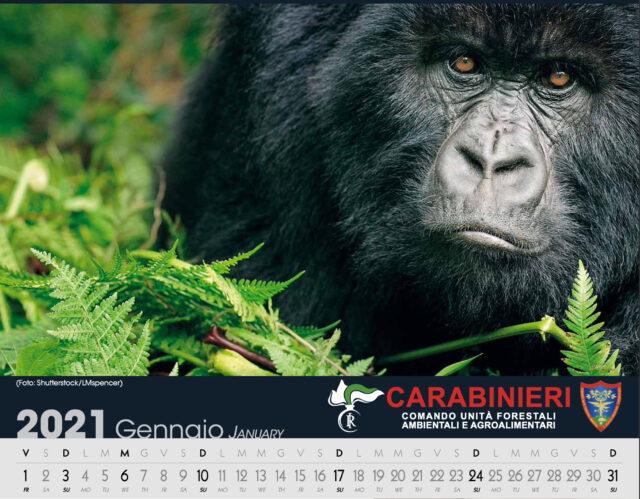 calendario cites carabinieri