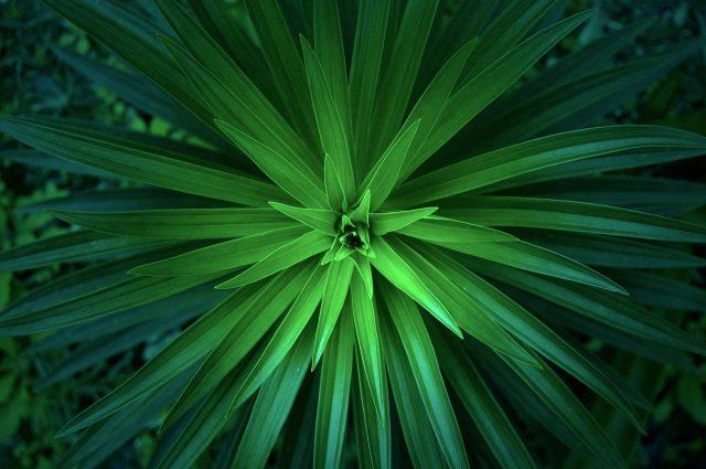 curiosità sulle piante